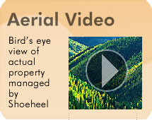 Shoeheel Land Management timber sales land sales appraisals GIS